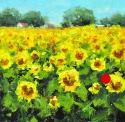 sold-stjohn.Sunflowers.6X6-oil.375