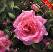 stjohn.Monets-Rose-Garden.12X12-oil.1350-watermarked