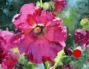 stjohn.Blossoms.8X8-oil.600