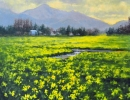 stjohn.Fields-of-Daffodils.18X18-oil.2550