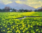 stjohn.Fields-of-Daffodils.18X18-oil.2550