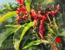 stjohn.Tropic-Flowers.8X10-oil.700